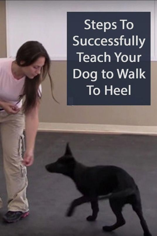 Pin On Dog Training Treats