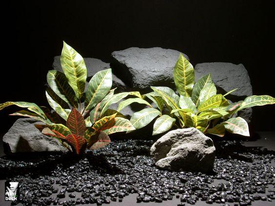 Reptile tanks, Freshwater aquarium and Reptiles on Pinterest