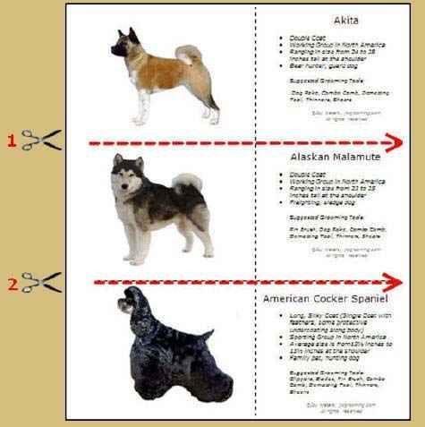 Dog Grooming Flashcards Doggroomingtools Dog Grooming Shop Dog Grooming Bulldog Grooming
