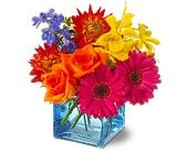 Calypso $45.95 http://www.bloomsbyvickrey.net/summer-flowers-81c.asp?topnav=TopNav