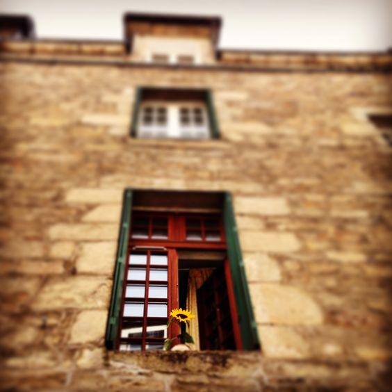 © Vannes, Tournesol sur le rebord d'une fenêtre.