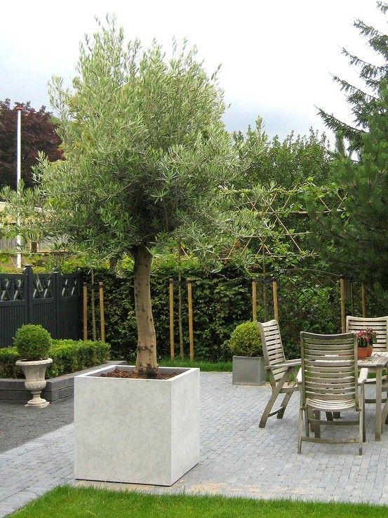 mediterrane tuin mediterranean garden mediterraanse. Black Bedroom Furniture Sets. Home Design Ideas
