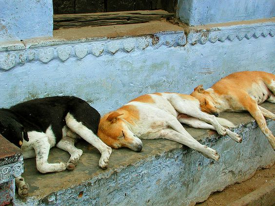 Three sleeping dogs | Flickr - Photo Sharing!