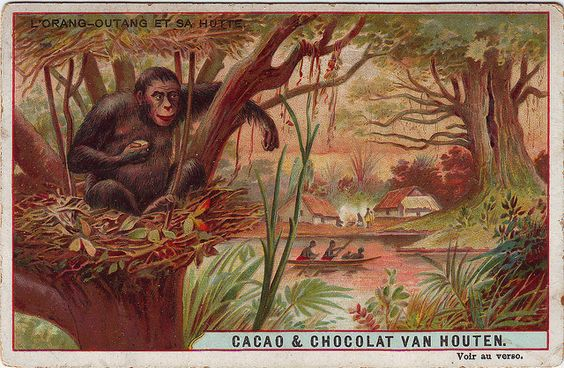 ♥VH2-3-4 WILD CREATURES AND THEIR HOMES VAN HOUTEN CACAO by patrick.marks,