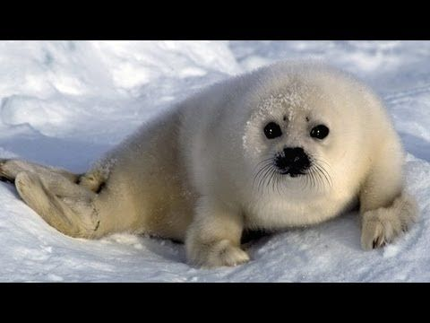 Winter Is The Most Wonderful Season Especially When You Are A Child I Think All Children Look Forward To The W Artic Animals Arctic Animals Antarctic Animals