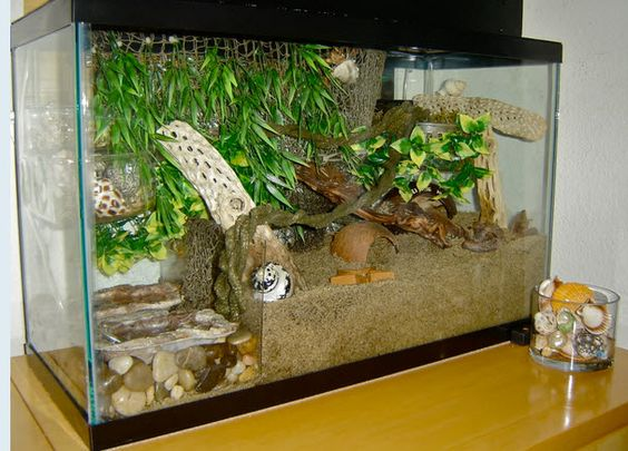 How to keep the sand out of your crab's pools: a DIY Plexiglas Tank Divider!