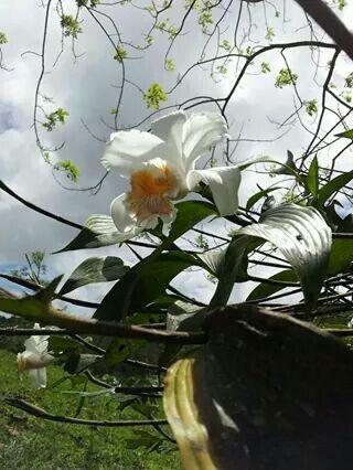 Orquideas de Costa Rica.