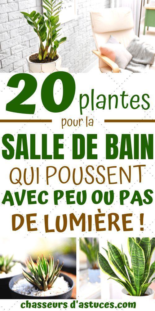 20 Plantes Parfaites Pour Salle De Bain Qui Poussent Avec Peu