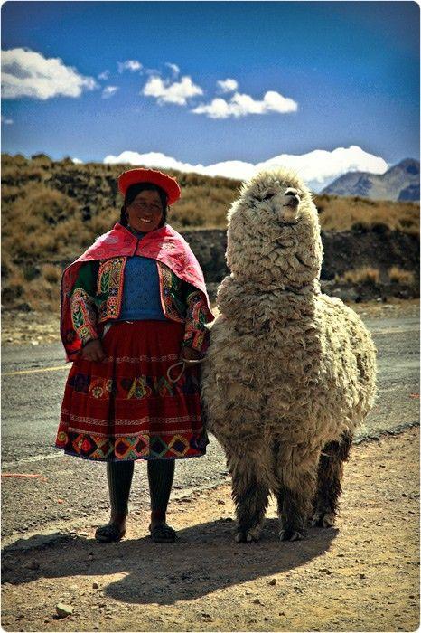 民族衣装の少女とかわいいアルパカの壁紙