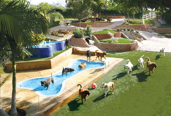 Santa Barbara Dog Boarding Ranch