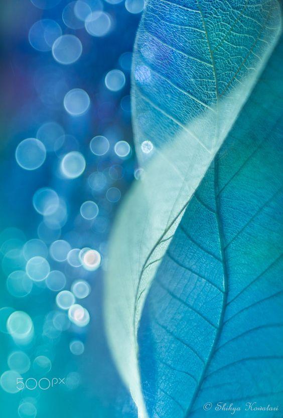 Summer Fragments by Shihya Kowatari