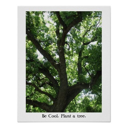 >>>Low Price Guarantee          Earth Day Plant-A-Tree Poster           Earth Day Plant-A-Tree Poster lowest price for you. In addition you can compare price with another store and read helpful reviews. BuyThis Deals          Earth Day Plant-A-Tree Poster lowest price Fast Shipping and save...Cleck Hot Deals >>> http://www.zazzle.com/earth_day_plant_a_tree_poster-228009107030245037?rf=238627982471231924&zbar=1&tc=terrest