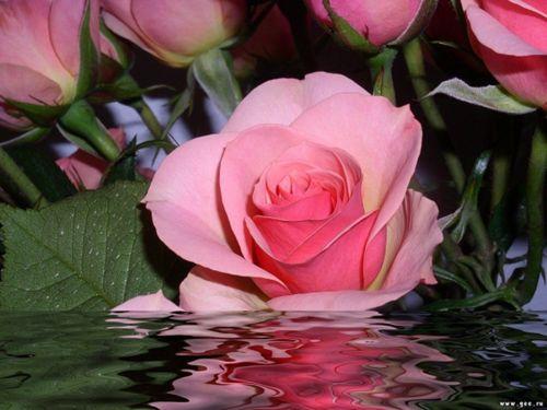 Szép rózsa,Szép virágok...,Legyen szép az estéd....,Gyertyák rózsával...,Szép rózsák pohárban...,Döntés.....,&O