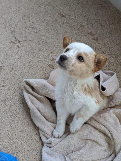 Dogs For Adoption Petfinder Dog Adoption Pet Adoption Animal Rescue