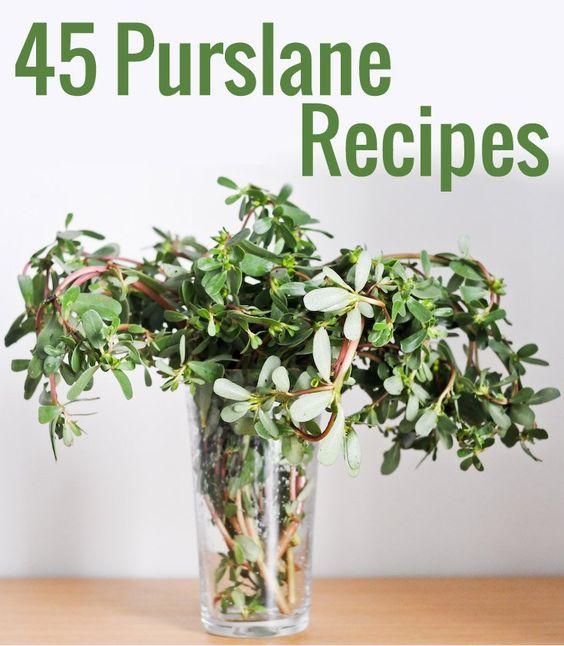 Le pourpier est l'un des aliments les plus nutritifs de la planète ! Voici 45 recettes de pourpier, et plein d'astuces pour le cuisiner.