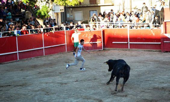 Santacara: Vacas Hermanos Arriazu -  (2) Recortador Jesulín A...