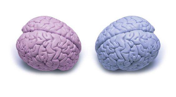Brains of anxious women work harder