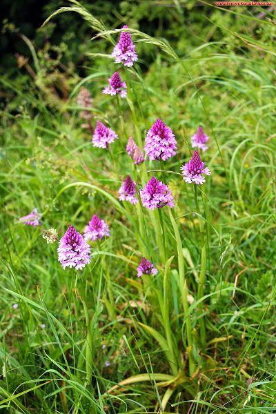 Sauvagement-Bon: Fleurs de Normandie