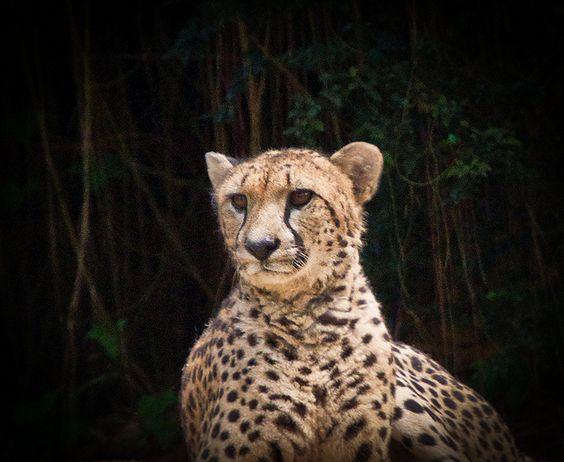 Singapore Zoo | Flickr - Photo Sharing!