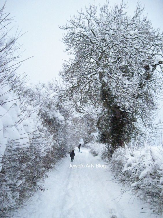 A tree on Border Lane, Clowne, N.E. Derbyshire, during the heavy snow in December 2010.