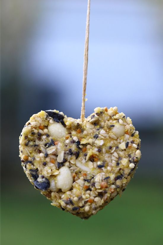 Vegetarian suet cakes for birds for How to make suet balls for bird feeders