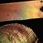 Scientists Made Artificial Mother of Pearl