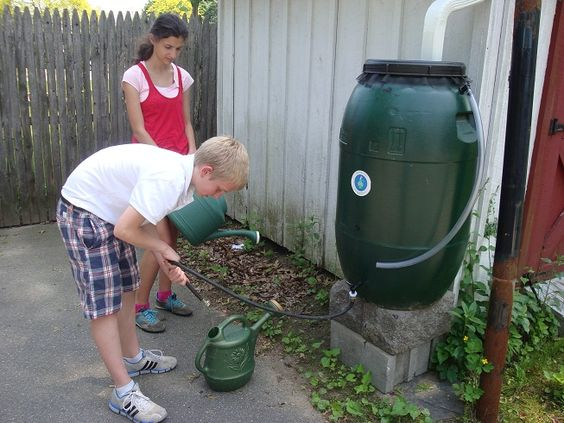 Community Garden: Rain barrels collect rain water from nearby roofs. Our two barrels can hold 50 gallons each.