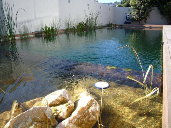Natural Pools NZ, Eco-friendly natural swimming pools free of chemicals,  naturally filtered. Natural Pool. Pinned to Pool Design by