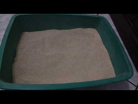 Areia Higienica Para Gatos Eficiente Por Alessandra Rancan