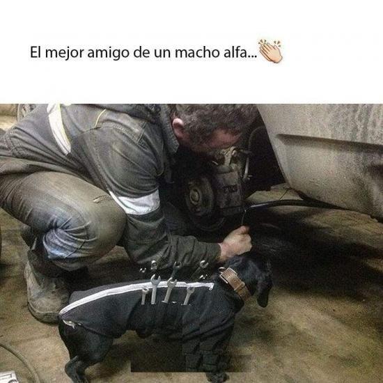 Memesespanol Chistes Humor Memes Risas Videos Argentina Memesespana Colombia Rock Memes Love Viral B Mejor Amigo Del Hombre Perros Mejores Amigos
