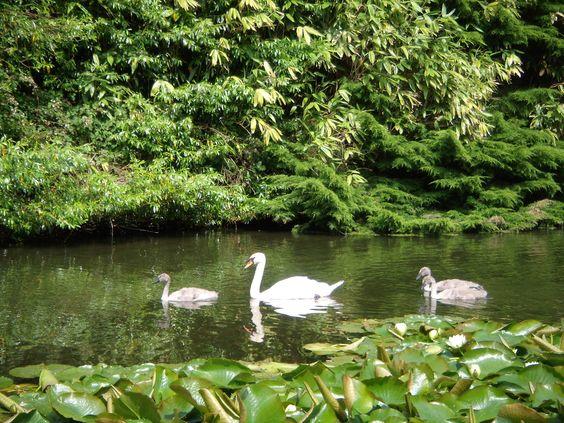 Swans England Estate