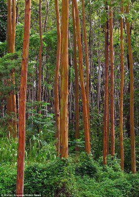 colorful-eucalyptus10
