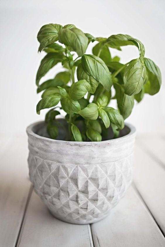 The best herbs to grow indoors #herbs #indoorgardening #gardening #containergardening