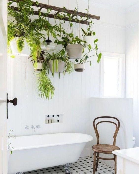 Bathroom Hanging Plants Best Bathroom Plants Bathroom Plants