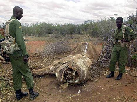 Parkranger untersuchen im Tsavo-Nationalpark in Kenia einen Ort, an dem zehn…