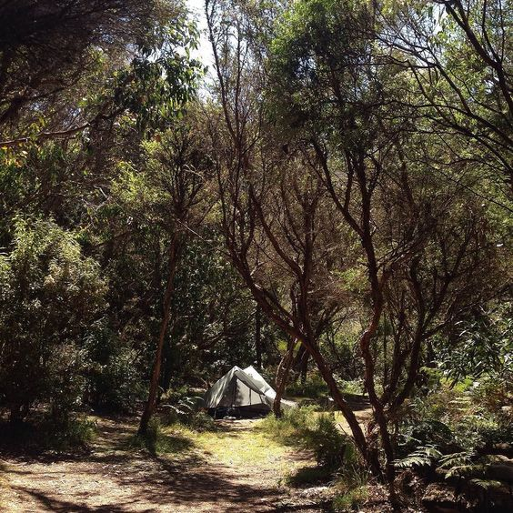 Camping in Blanket Bay along the Great Ocean Walk. #camping #hiking #greatoceanwalk #victoria #australia #apollobay #nature by davethevagabond http://ift.tt/1LQi8GE