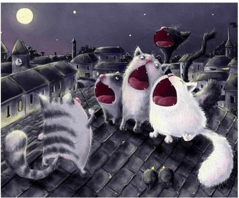 cats' song on full moon