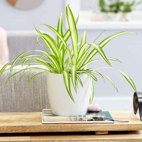 The Best Easy to Care For Indoor Plants Even Beginners Won't Kill #home #style #interiordesign