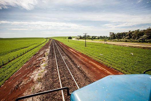 Ferroeste - Plantação de soja no entorno da ferrovia entre SCA e SCB!! Foto Revista Ferroviária — em Cascavel.