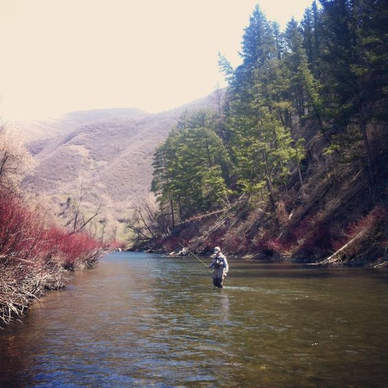 Fly fishing utah and rivers on pinterest for Trout fishing utah