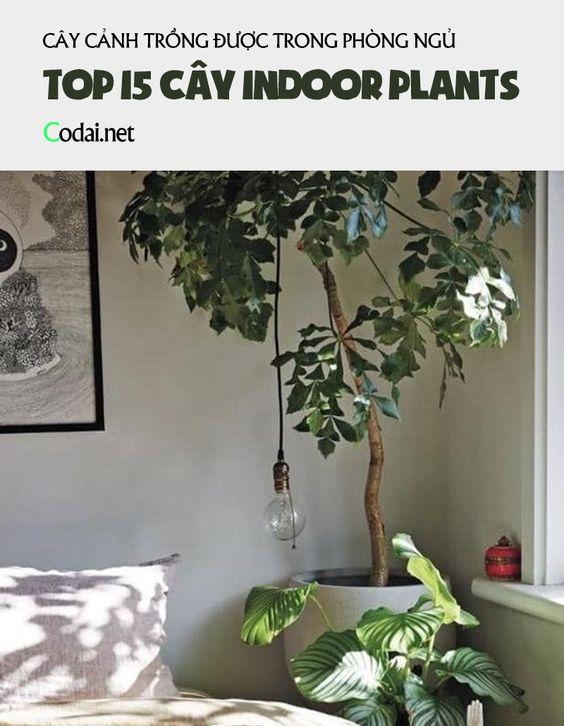 15 cây Indoors có thể trồng trong phòng ngủ