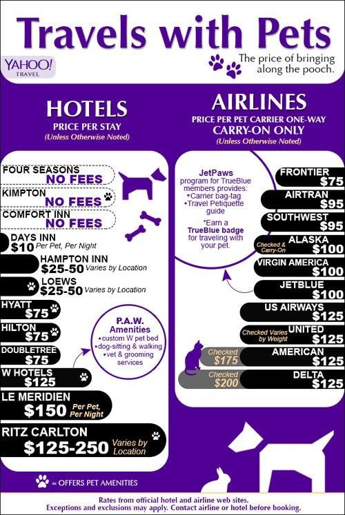 Pet Travel: The Cheapest Hotels and Airlines for Your Fur Baby