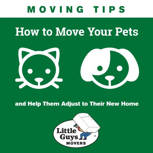 How To Move Pets And Help Them Adjust To Their New Home Moving Tips Moving Pets