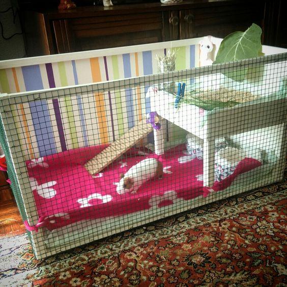 Homemade guinea pig cages bing images for Homemade guinea pig