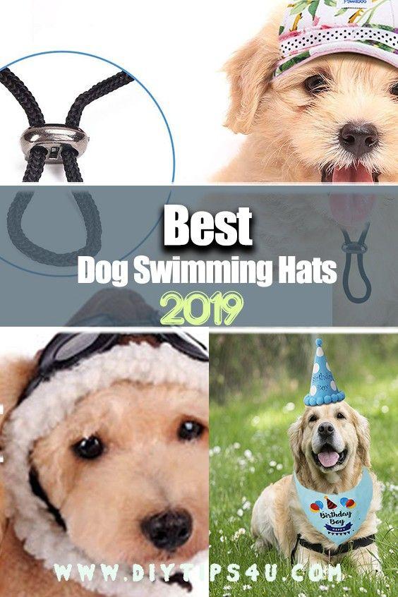 orvis dog hat