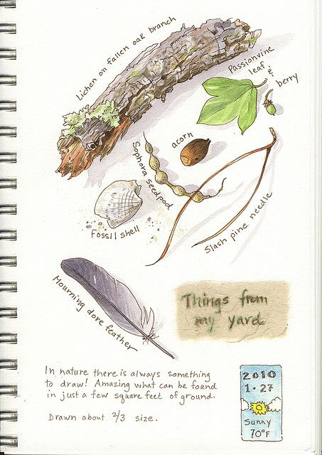 Nature walk and notebook ideas . . .  Nature Art Journal - Elizabeth Smith
