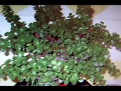 Arquitecto de sue os feng shui plantas en tu hogar for Tips de feng shui para el hogar