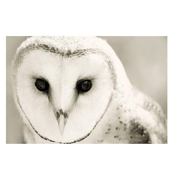 White Owl Home Decor High Quality Porcelain Owl