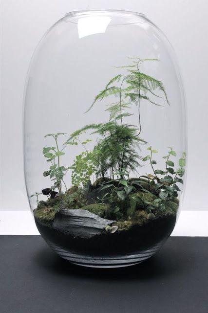 växt i glaskupa