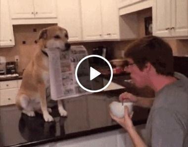 Cachorro mais que amigo é um companheiro
